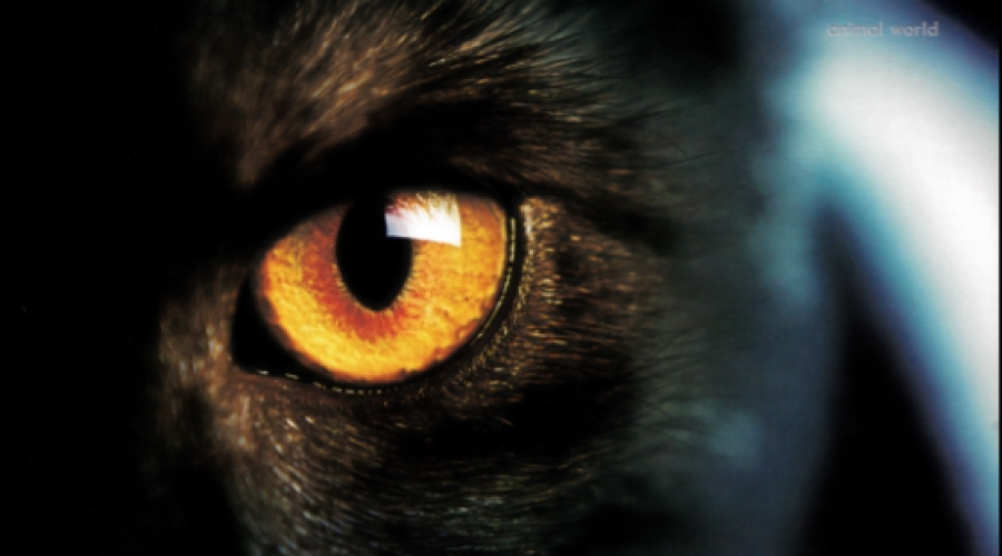 The human soul is linked to animals